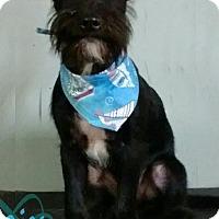 Adopt A Pet :: Onix - Hillside, IL