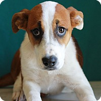 Adopt A Pet :: Luckie - Waldorf, MD