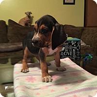 Adopt A Pet :: Pilot - Hohenwald, TN