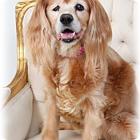 Adopt A Pet :: Sweetie - New Orleans, LA