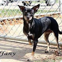 Adopt A Pet :: Tiffany - Texarkana, AR