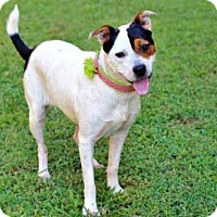 Adopt A Pet :: SHAYNA - richmond, VA