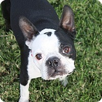 Adopt A Pet :: Truman - Henderson, NV