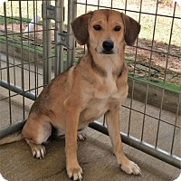 Adopt A Pet :: Letty - Meridian, MS