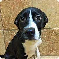 Adopt A Pet :: Casio *Petsmart GB* - Appleton, WI