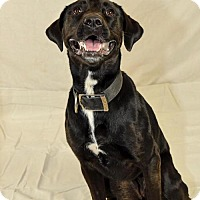Adopt A Pet :: Mary Jane - Courtsey Post - Boulder, CO