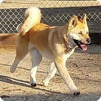 Adopt A Pet :: Kabocha - Romoland, CA