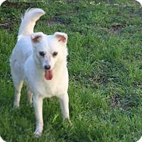 Adopt A Pet :: Roach - Lufkin, TX