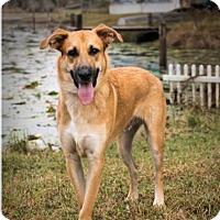 Adopt A Pet :: CODY-16B - Lithia, FL