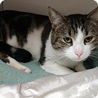 Adopt A Pet :: Brutus - Scituate, MA