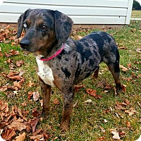 Adopt A Pet :: Asia - New Oxford, PA