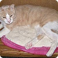 Adopt A Pet :: Riley - Scottsdale, AZ
