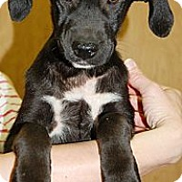 Adopt A Pet :: Twinkletoes - Brattleboro, VT