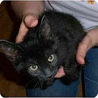Adopt A Pet :: Luna - Odenton, MD