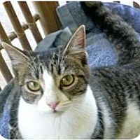 Adopt A Pet :: Heather - Makawao, HI