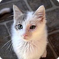 Adopt A Pet :: Jade - Xenia, OH
