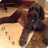 Adopt A Pet :: Boca Raton FL - Otis - Boca Raton, FL