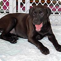 Adopt A Pet :: Raven - Minneola, FL