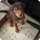 Adopt A Pet :: Apollo
