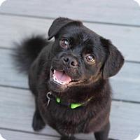 Adopt A Pet :: Spider - Smyrna, GA
