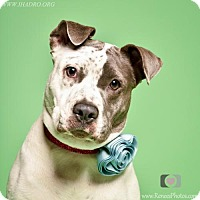 Adopt A Pet :: Geniveve - Blacklick, OH