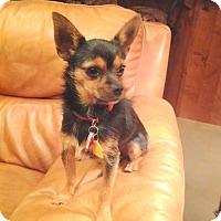Adopt A Pet :: OTTO - Hurricane, UT