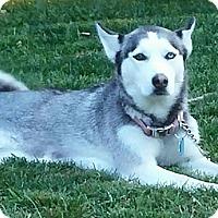 Adopt A Pet :: Kaya - Zanesville, OH