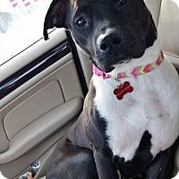 Adopt A Pet :: Sam - Grafton, WI