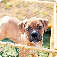 Adopt A Pet :: Dresden - Peachtree City, GA