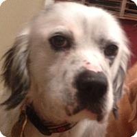 Adopt A Pet :: WES - Pine Grove, PA