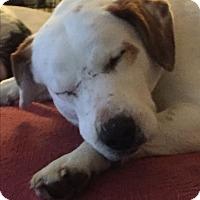 Adopt A Pet :: Jed - Plainfield, IL