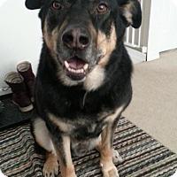 Adopt A Pet :: Koby - Saskatoon, SK