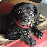 Adopt A Pet :: Marlee 3137 - Toronto, ON