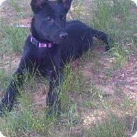 Adopt A Pet :: Blair - Portland, ME