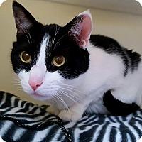 Adopt A Pet :: San Antonio - Salisbury, MA