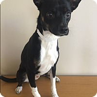 Adopt A Pet :: Floyd - Gahanna, OH