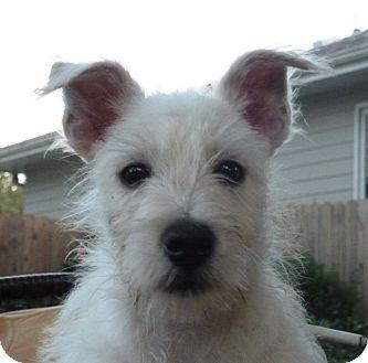 Little White Dog Rescue Omaha Ne