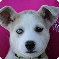 Adopt A Pet :: Marilyn~adopted!! - Glastonbury, CT