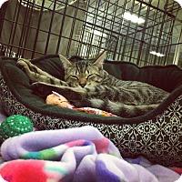 Adopt A Pet :: Paulie - Erwin, TN