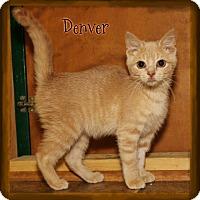 Adopt A Pet :: Denver - Shippenville, PA