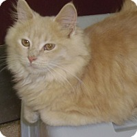 Adopt A Pet :: Dusty - Muscatine, IA