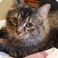 Adopt A Pet :: Fracas - Toronto, ON
