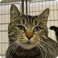Adopt A Pet :: Gingersnap - Sherwood, OR
