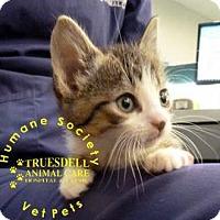 Adopt A Pet :: Frosty - Janesville, WI