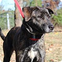 Adopt A Pet :: Josephine - Conway, AR