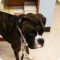 Adopt A Pet :: Beau - Rootstown, OH