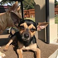 Adopt A Pet :: Pancho - Allentown, PA