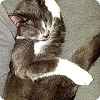 Adopt A Pet :: Nimbus - Mt. Prospect, IL