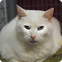 Adopt A Pet :: Trixie - Winchendon, MA