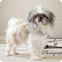 Adopt A Pet :: Brian - Oklahoma City, OK